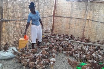 Kippenfokkerij biedt Ethiopische meisjes veilige toekomst kinderhandel Afrika Terre des Hommes