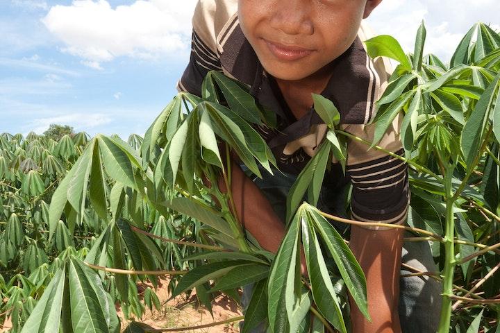 Chan Bros Touch (13) uit Pursat in Cambodja ging niet naar school. In plaatst daarvan werkte hij met zijn hakmes en schop op de cassaveplantage. Zijn familie was voor een groot deel afhankelijk van zijn inkomen. Chan kon daarom niet naar school, maar dankzij maatschappelijk werker Seng Chamroen kwam daar verandering in. Gelukkig maar, want Chan heeft heel wat in zijn mars.