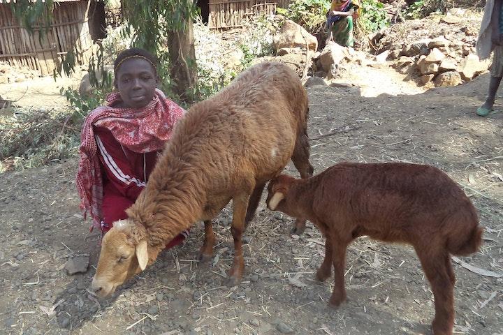 Felegush with her sheep