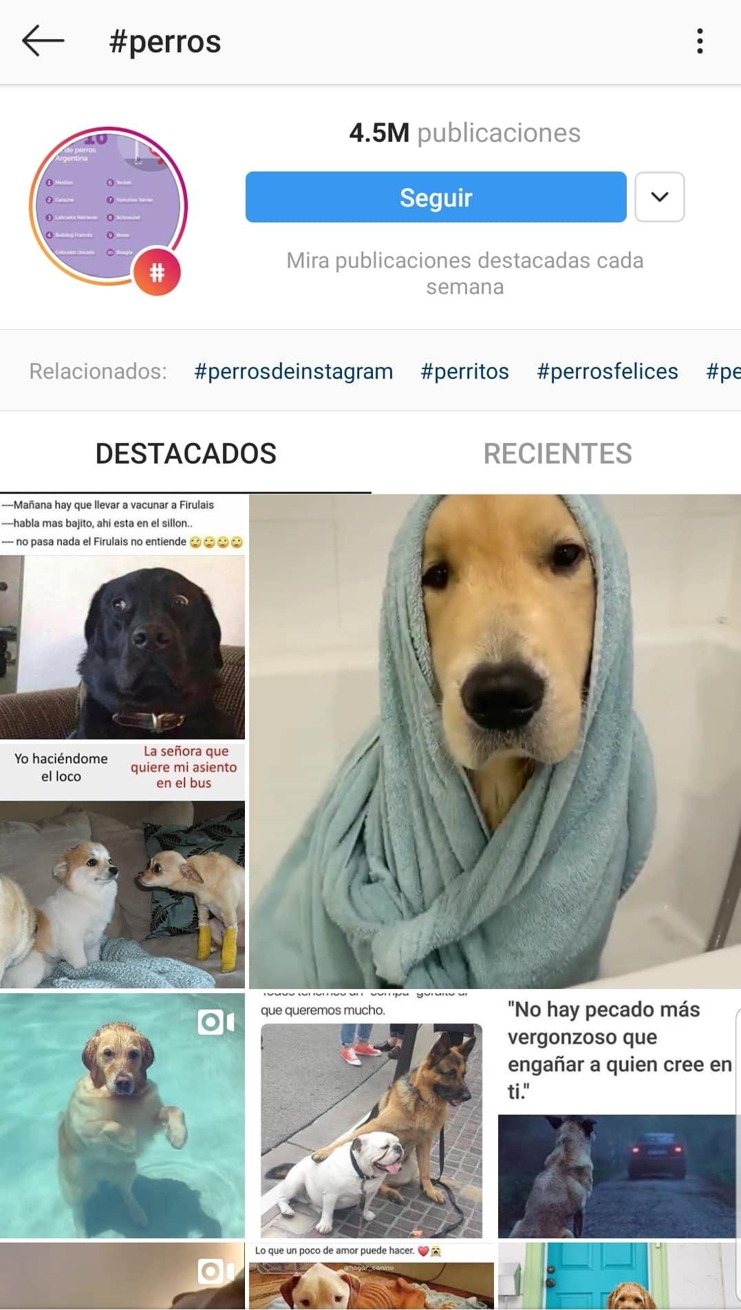 Mejores-Hashtags-Instagram-perros