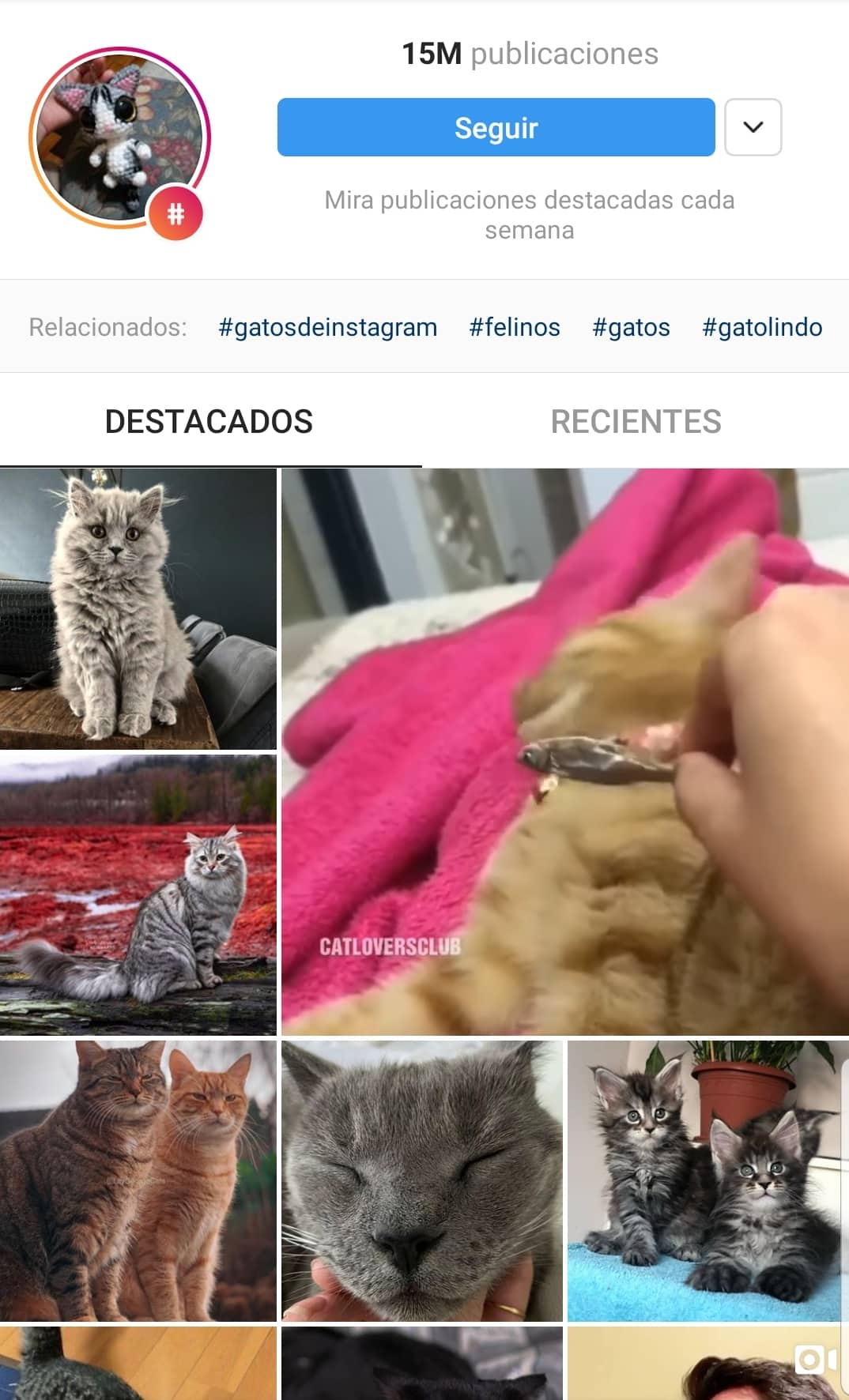 Best-Hashtags-Instagram-cats