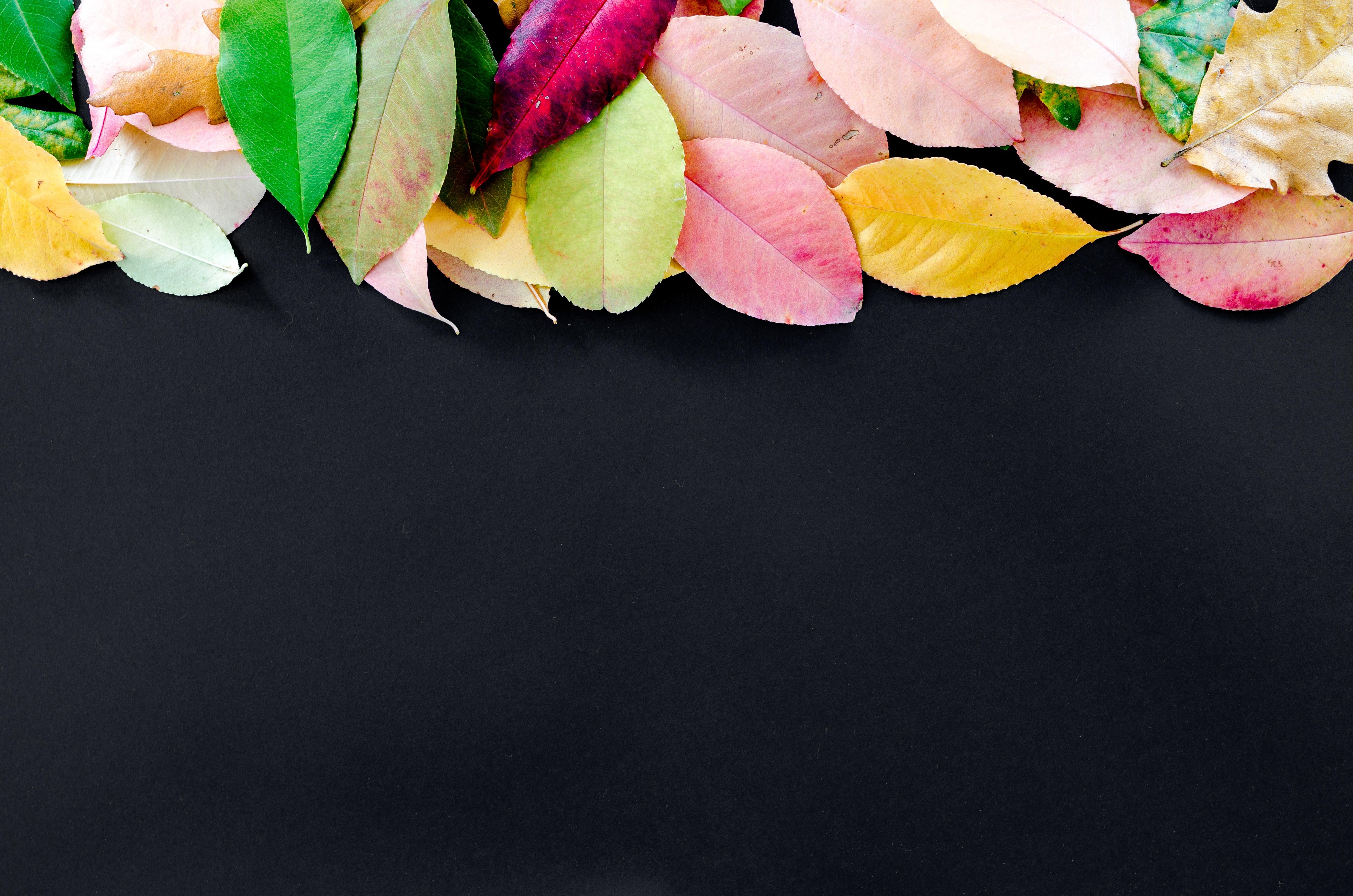 Images automne gratuites