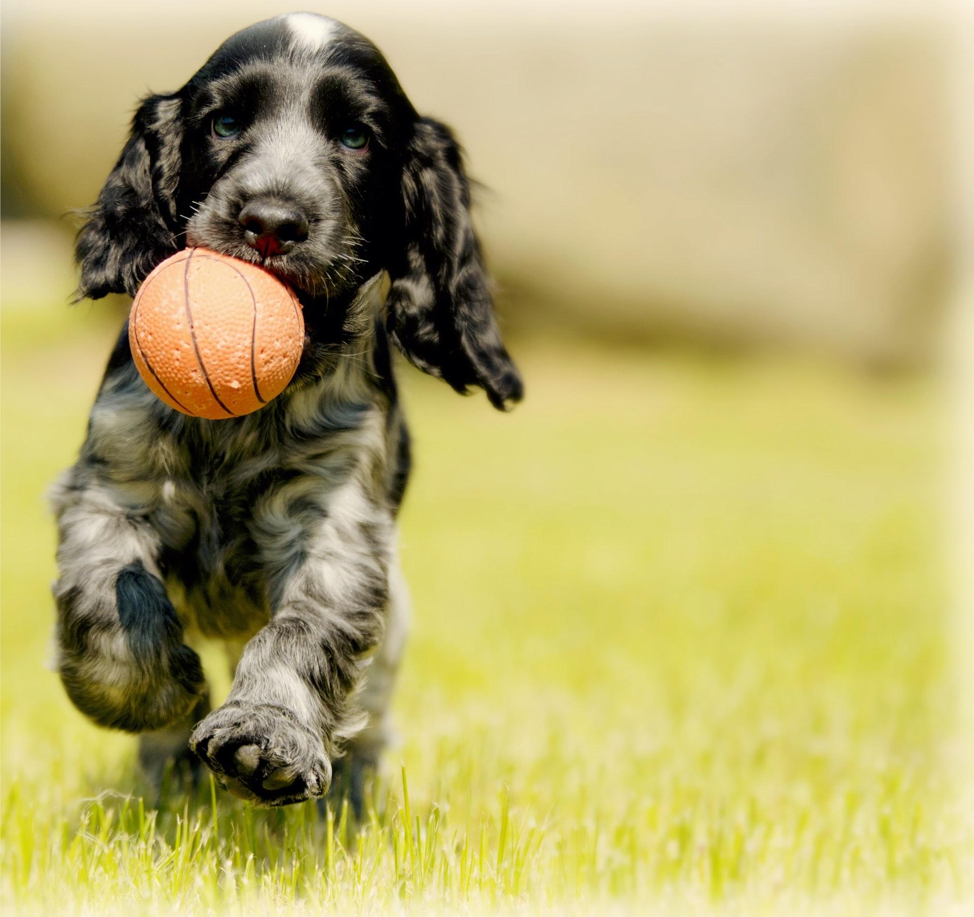 Produtos para revenda: acessórios de pets