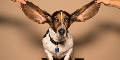 Social listening: o que é, como funciona e como utilizá-lo