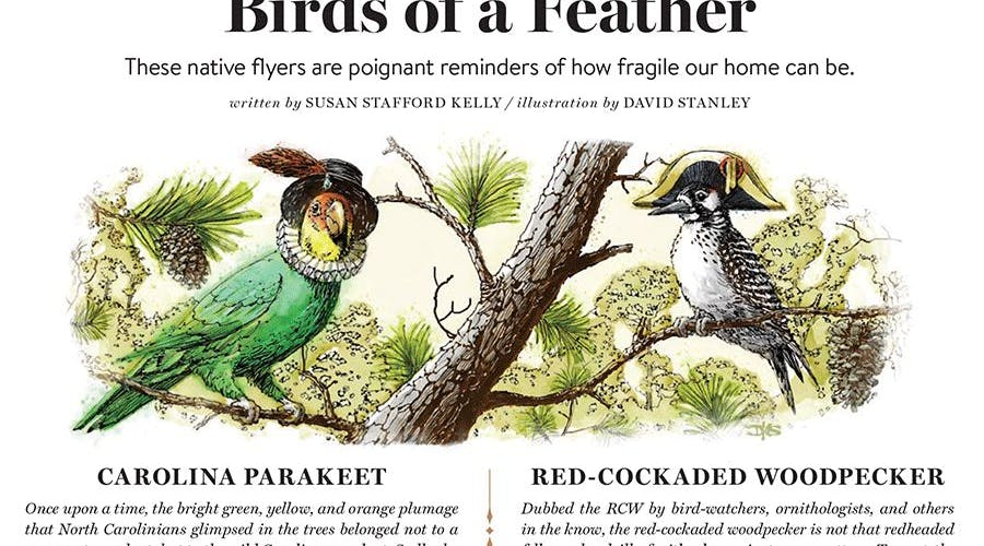 BIRDS OF A FEATHER Portfolio Cover