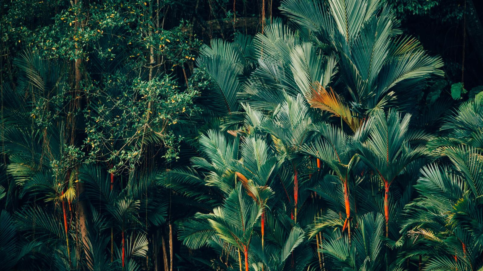 Urban Jungle, project created at Fortnight Studio