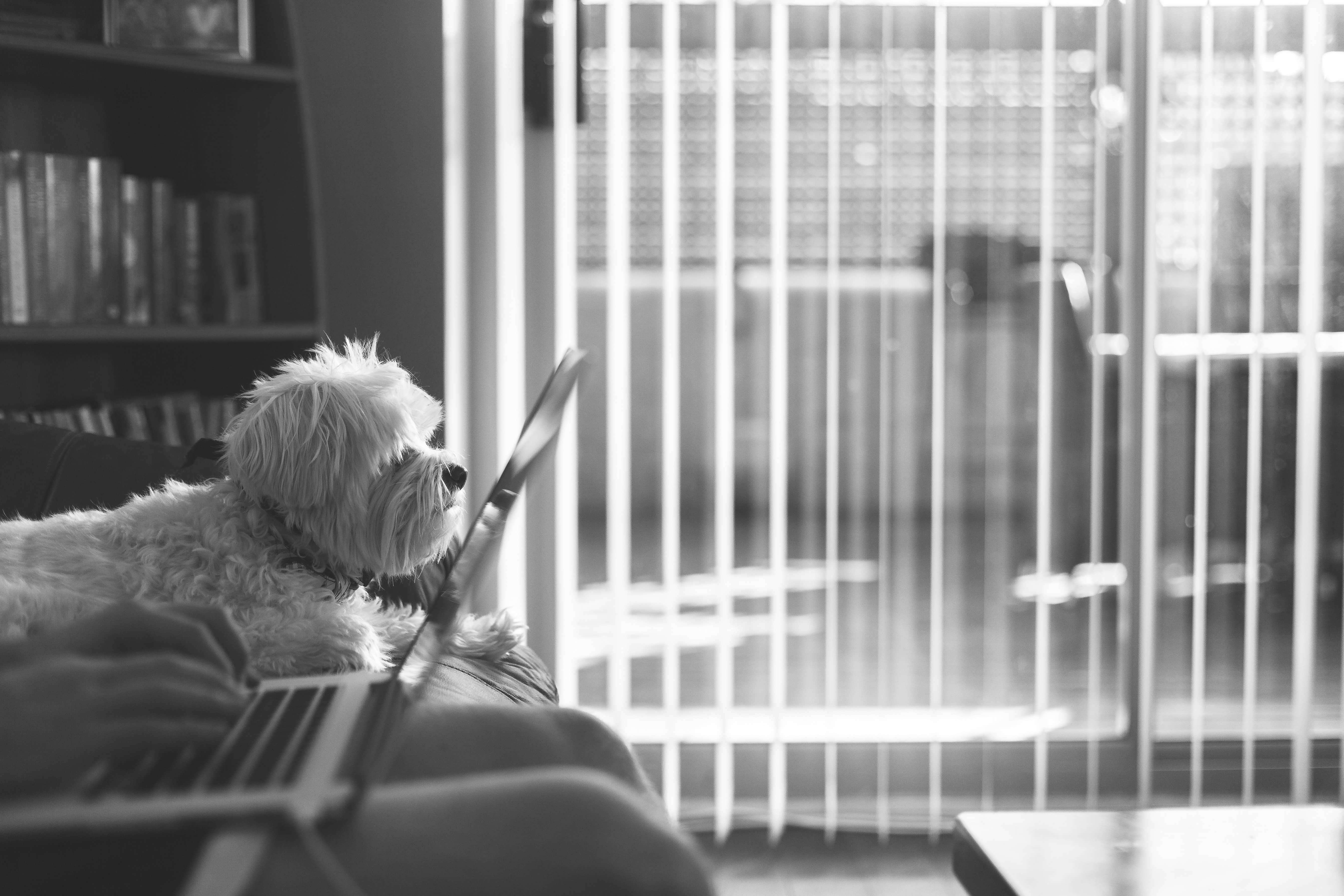 Hund och person som förbereder uppsägning av hyreskontrakt med dator i knäet sittande på soffa.