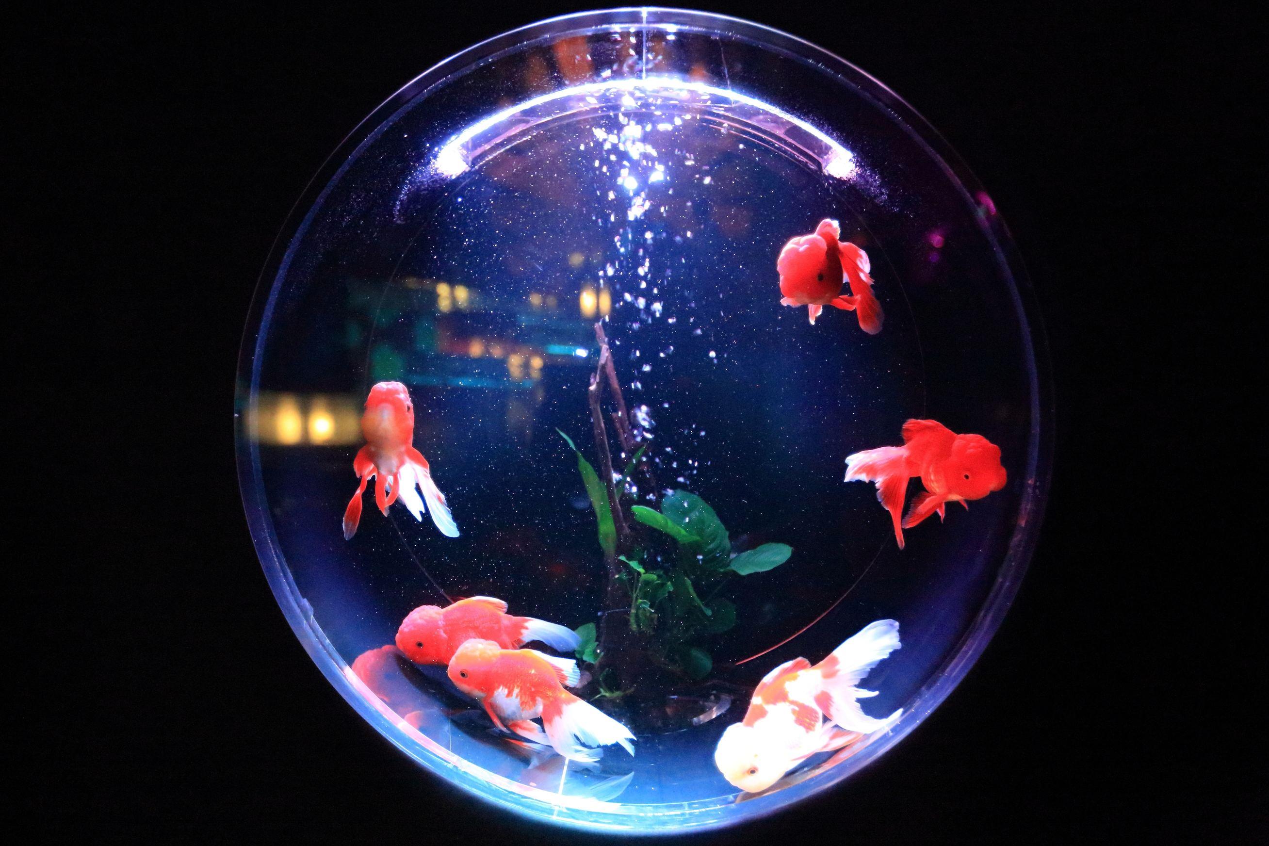 déménagement aquarium