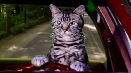 Cat driving car