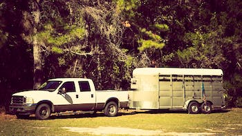 White pick up truck with a horse trailer