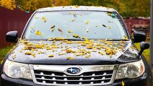 Black Subaru with leaves on its hood