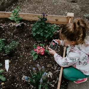Child taking photo of flower with smartphone