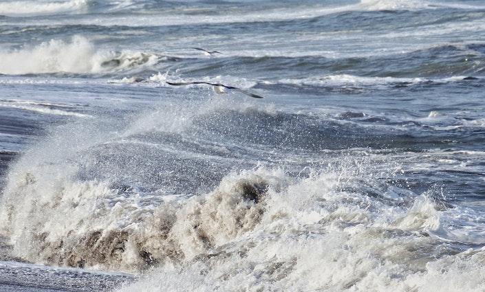 Hav og måger