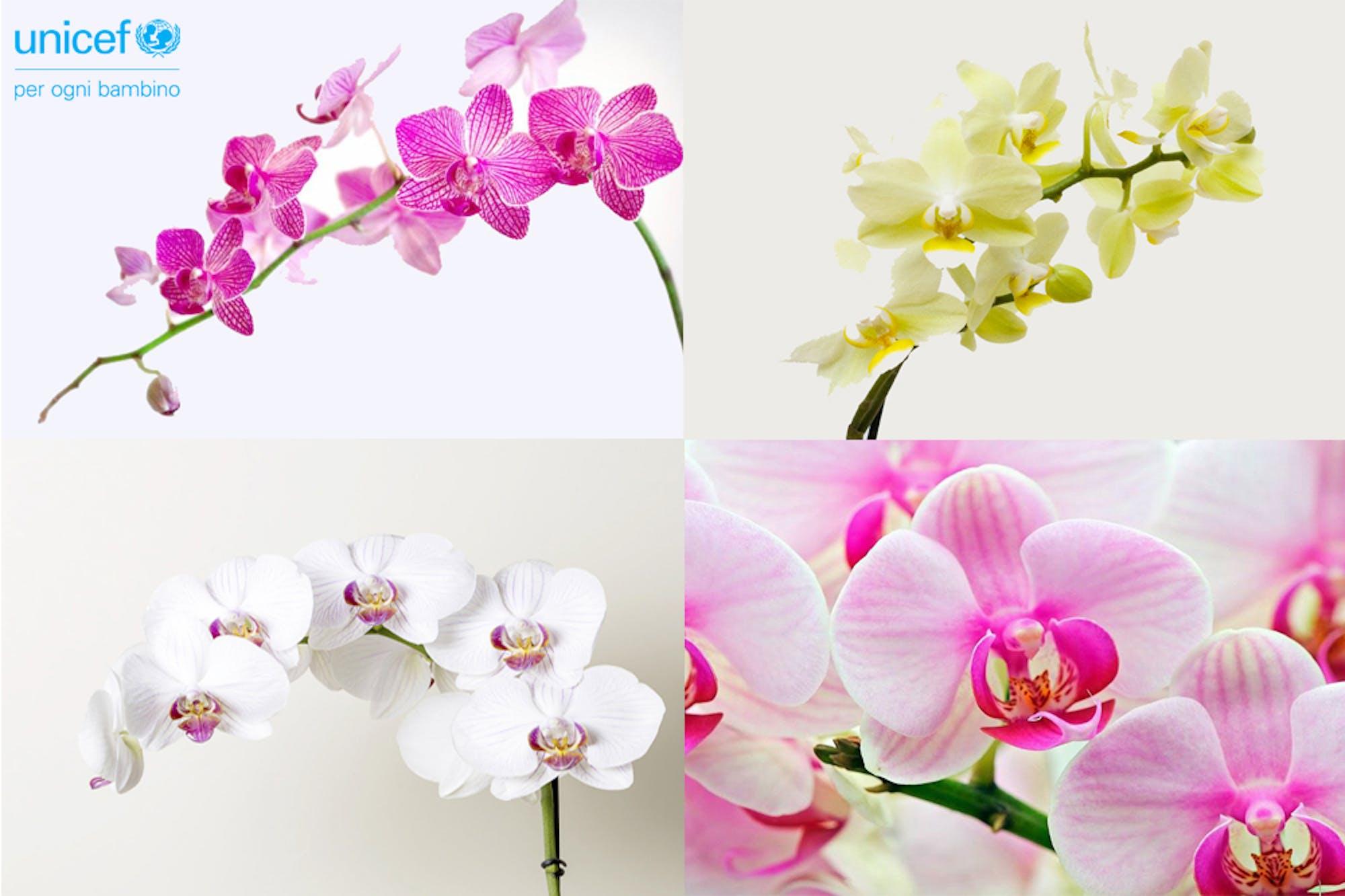 Una occasione in più per sostenere la campagna Orchidea dell'UNICEF