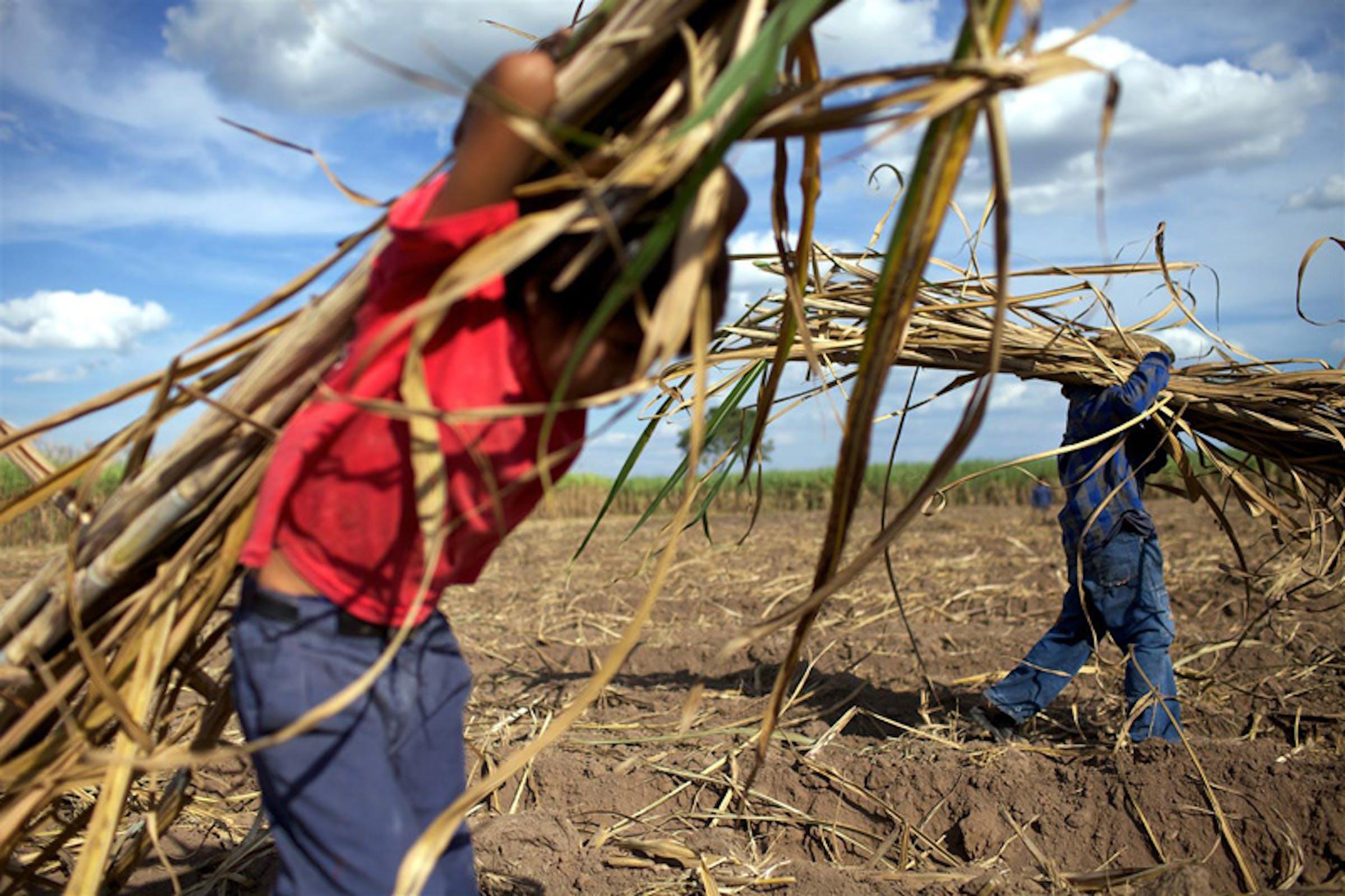 Juan Gabriel, 11 anni, trasporta canne da zucchero in un campo nei pressi di San Juan del Carmen (Bolivia) - ©UNICEF/NYHQ2011-1480/Friedman-Rudovsky