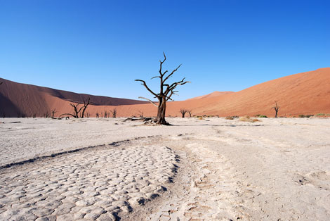 Resti di alberi di acacia a Deadvlei, nel deserto del Naukluft Park, in Namibia - ©Hakan Tropp/Stockholm International Water Institute