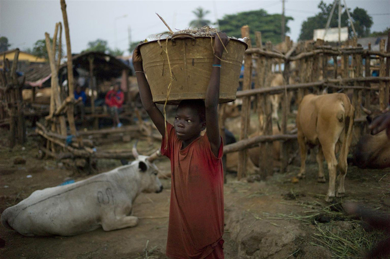 Un bambino che lavora in un mattatoio a Conakry, capitale della Guinea. Il contatto con animali infetti è una delle principali cause del contagio del virus Ebola - ©UNICEF/NYHQ2009-2200/Michael Kamber