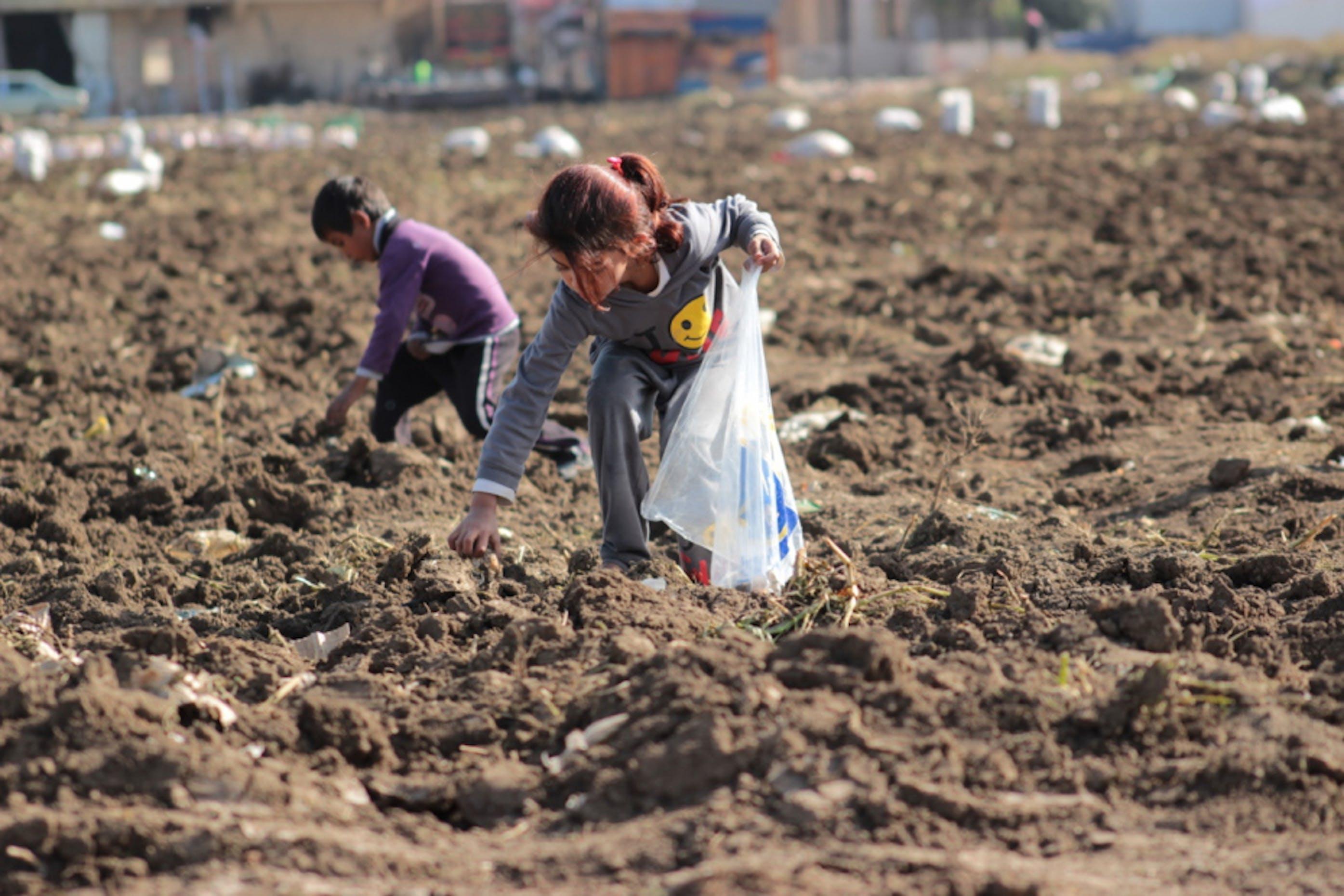 Questi bambini profughi siriani lavorano insieme agli adulti in un campo di patate in Libano. Spesso, a fine giornata, tornano con delle buste per raccattare di nascosto qualche patata rimasta nel terreno - ©Ahmad Baroudi/Save the Children
