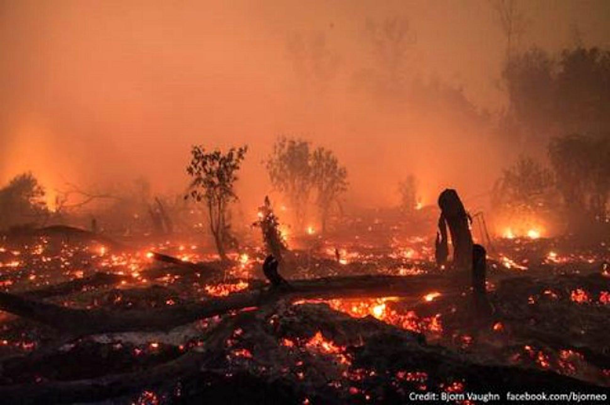 Un'immagine dei roghi che stanno devastando l'Indonesia - ©Björn Vaughn