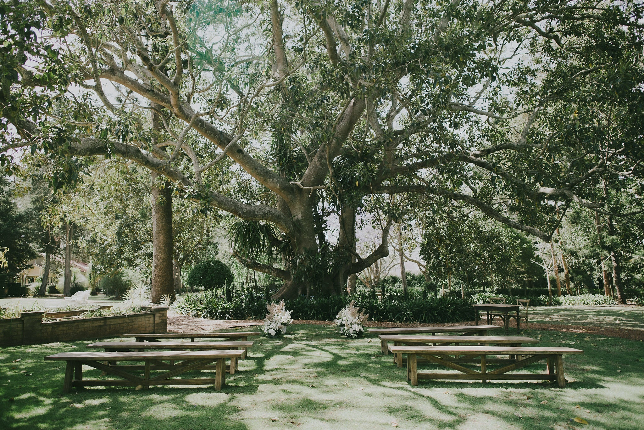 Ceremony location under a big tree