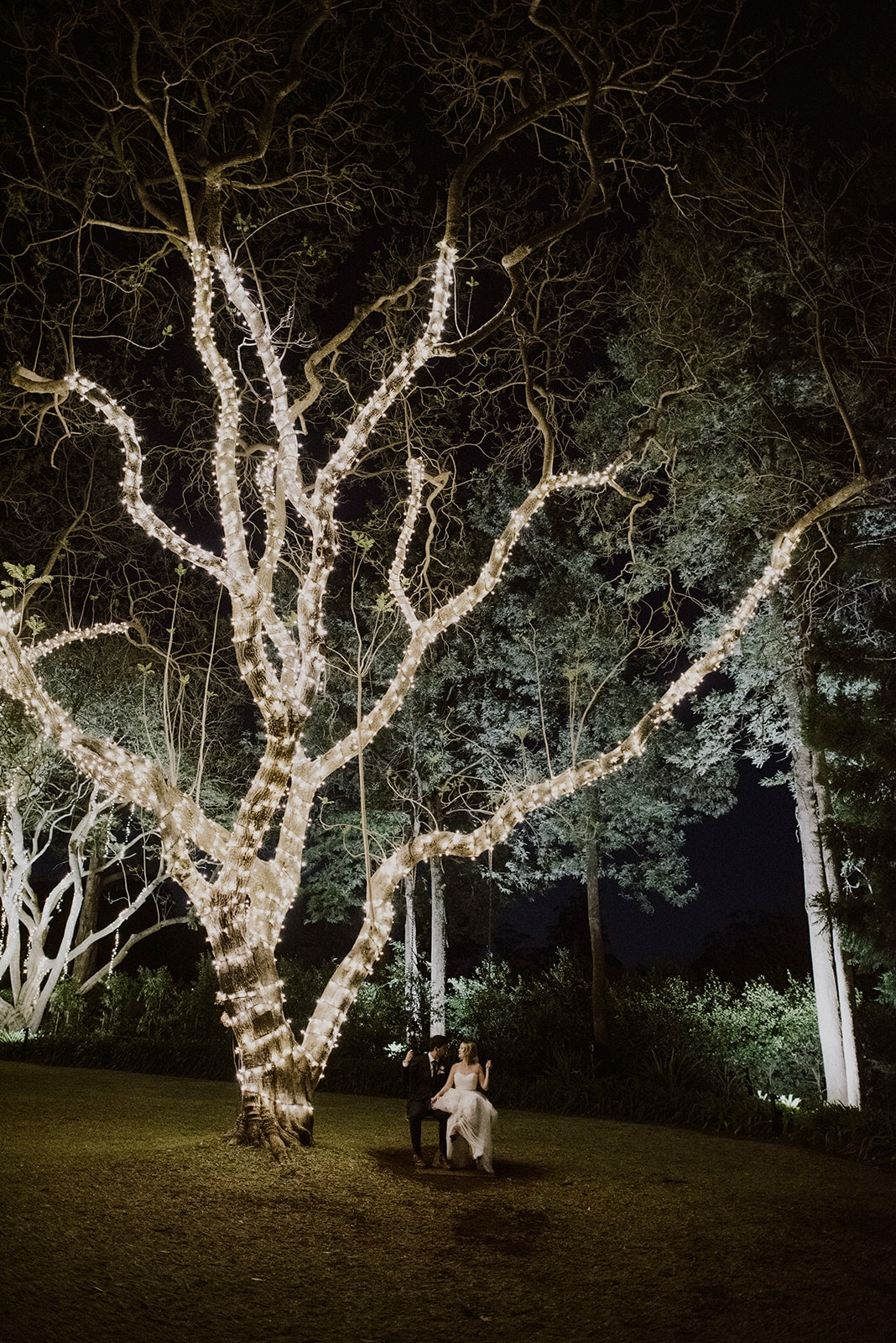 Tree covered in fairylights with couple on swing