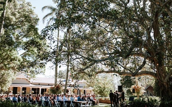 Wedding ceremony under tree with people in chairs