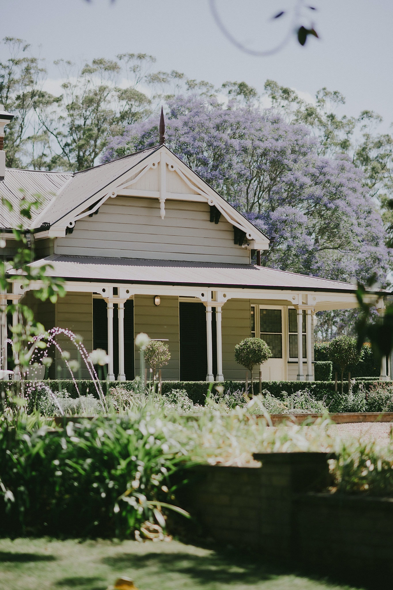 Homestead with Jacaranda tree