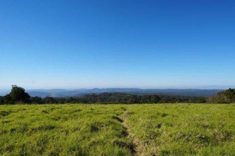 Grassy Hiking Spot