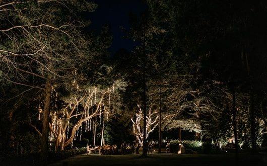 Night View Of Garden