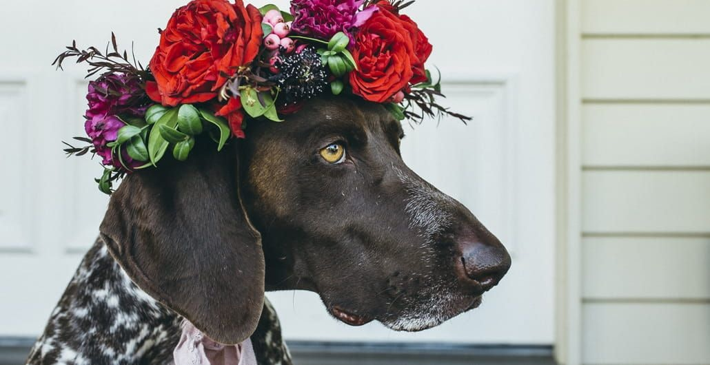 Ideas on how to dress your dog for your wedding day