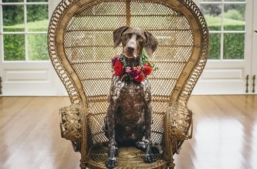 Dog With Flowers On Its Neck