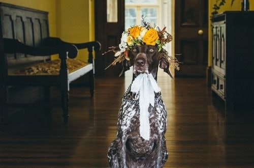 Dog with yellow flowers on head