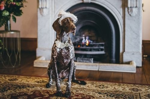 Dog in front of fireplace wearing lace hat