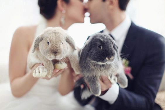 Couple kiss while holding bunny rabbits