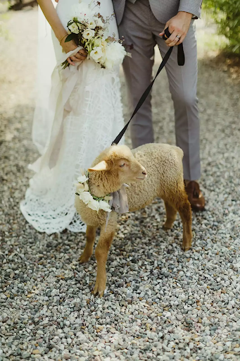 Bridal couple with lamb