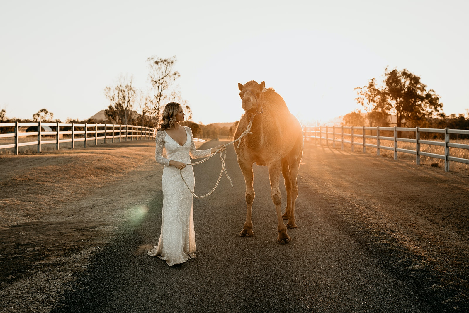 Bride walks beside a camel