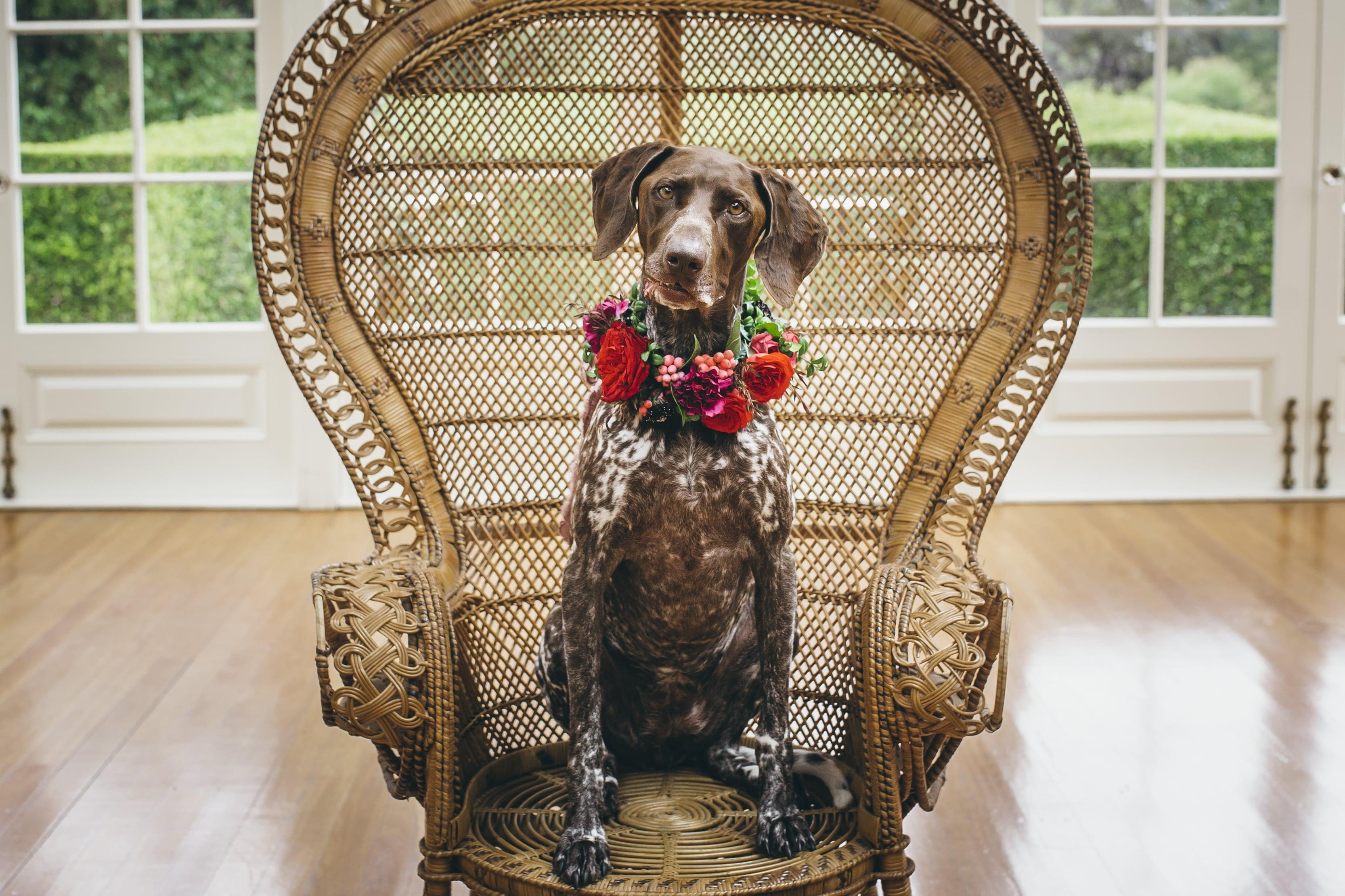Dog wears floral wreath around neck