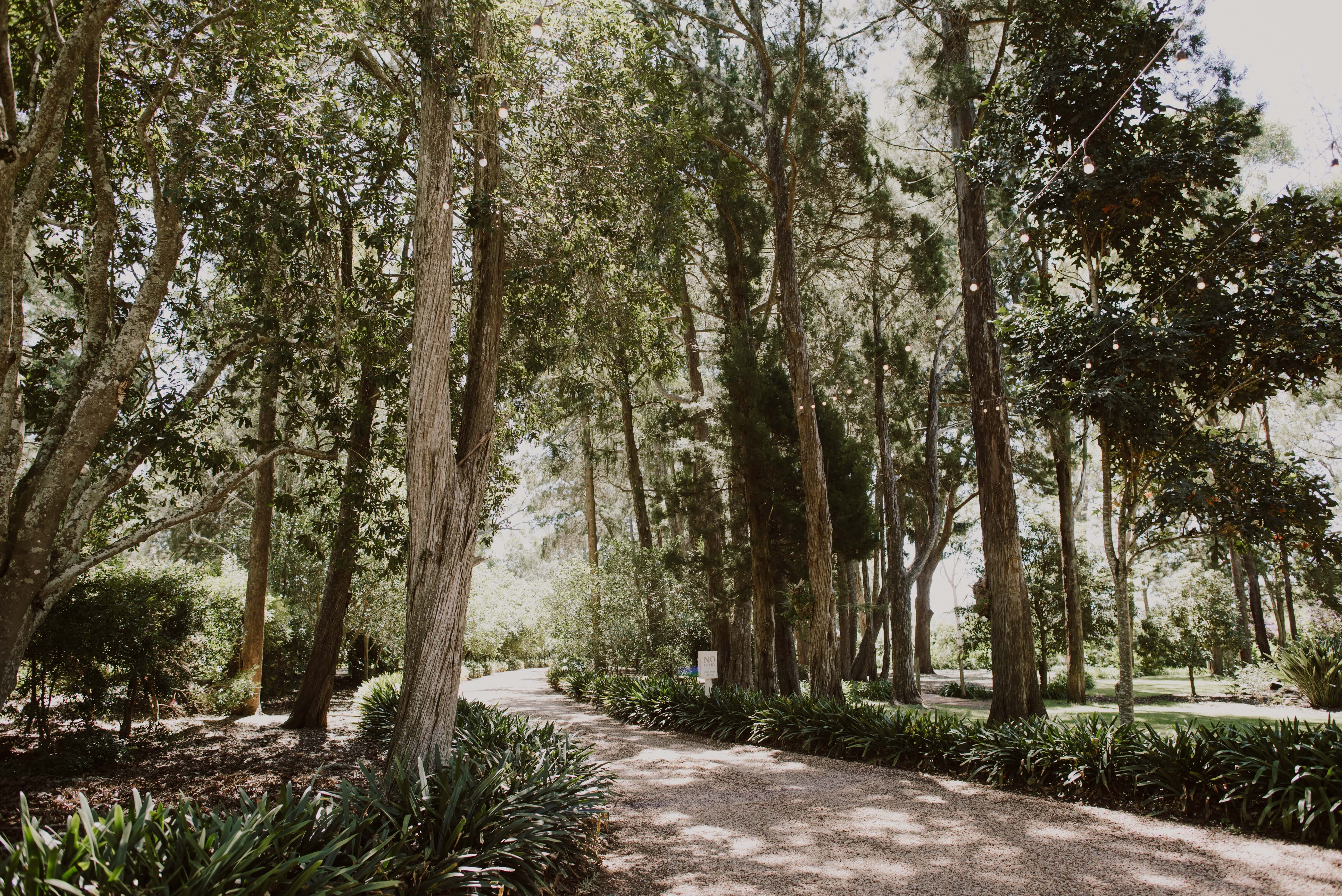Tree-lined driveway