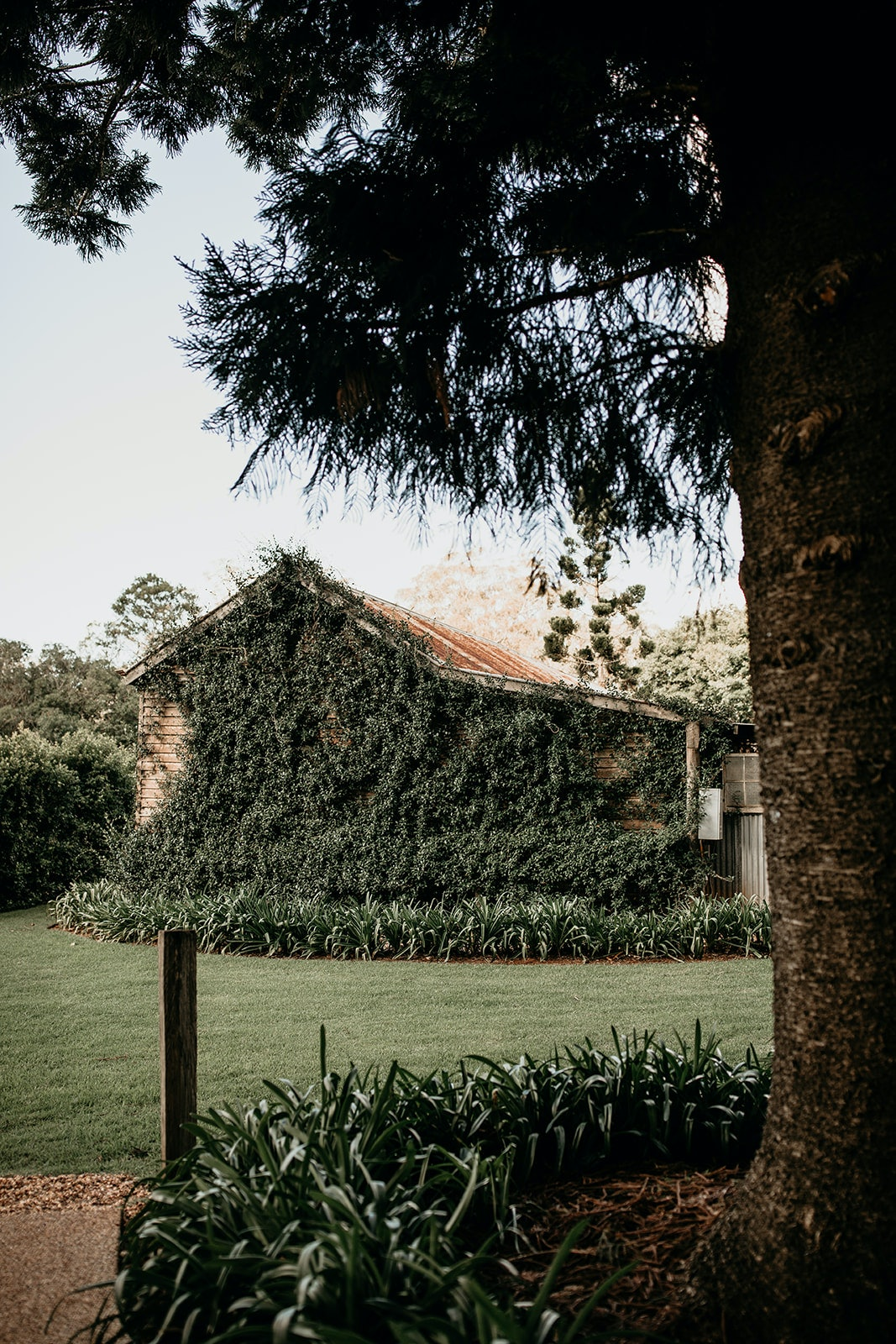 Stables covered with green vines