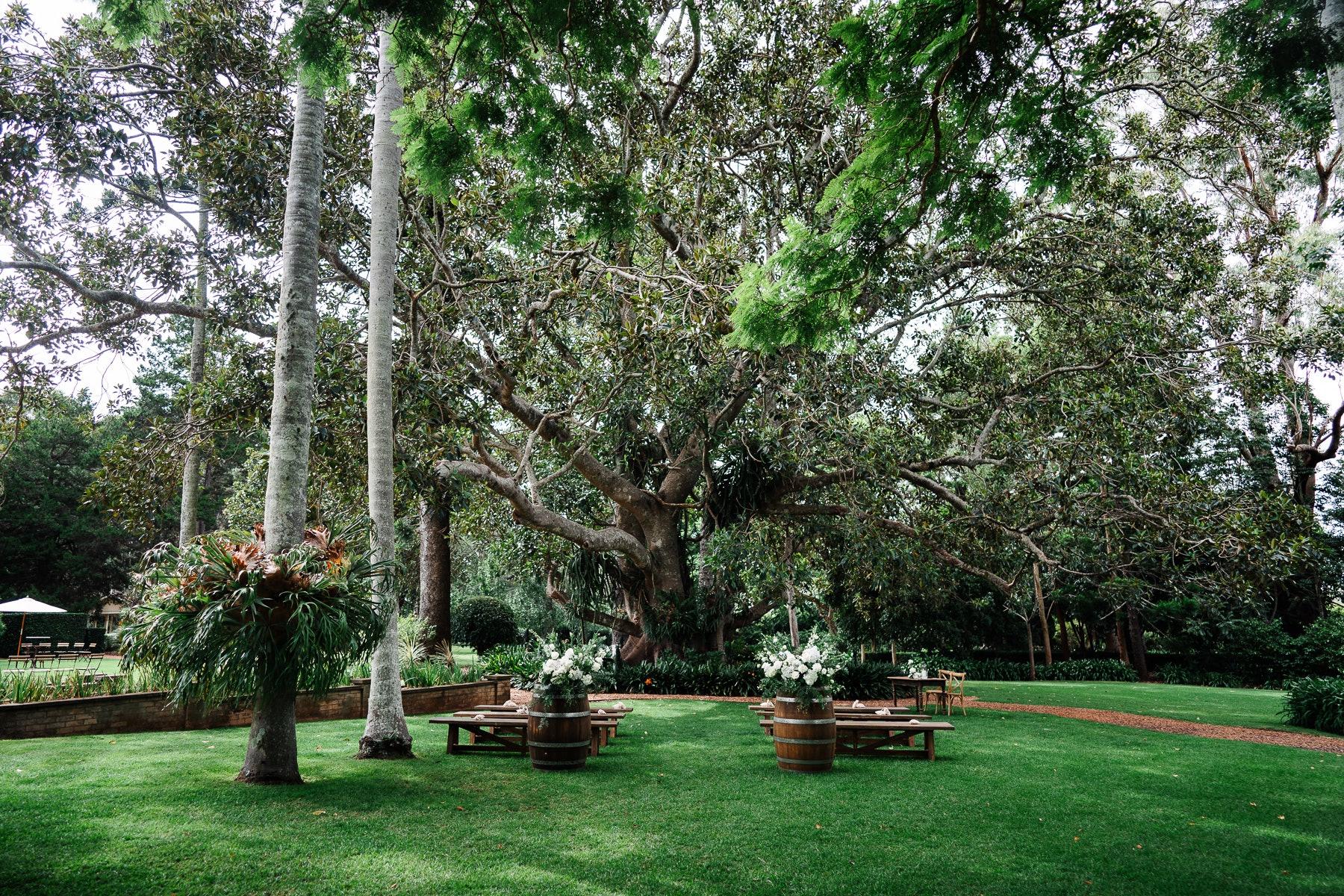 Wedding ceremony under Fig Tree