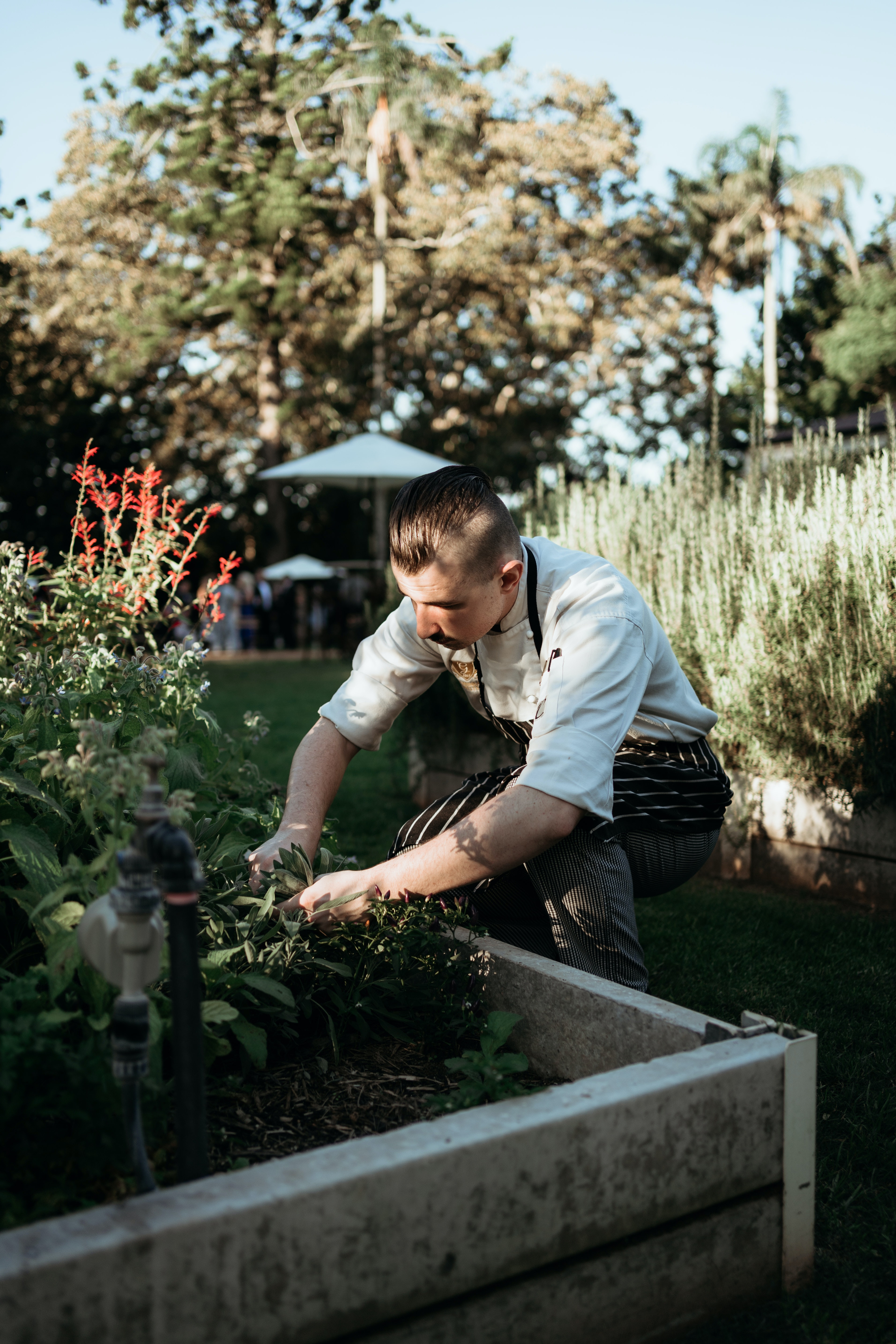 Chef looks in vegetable patch