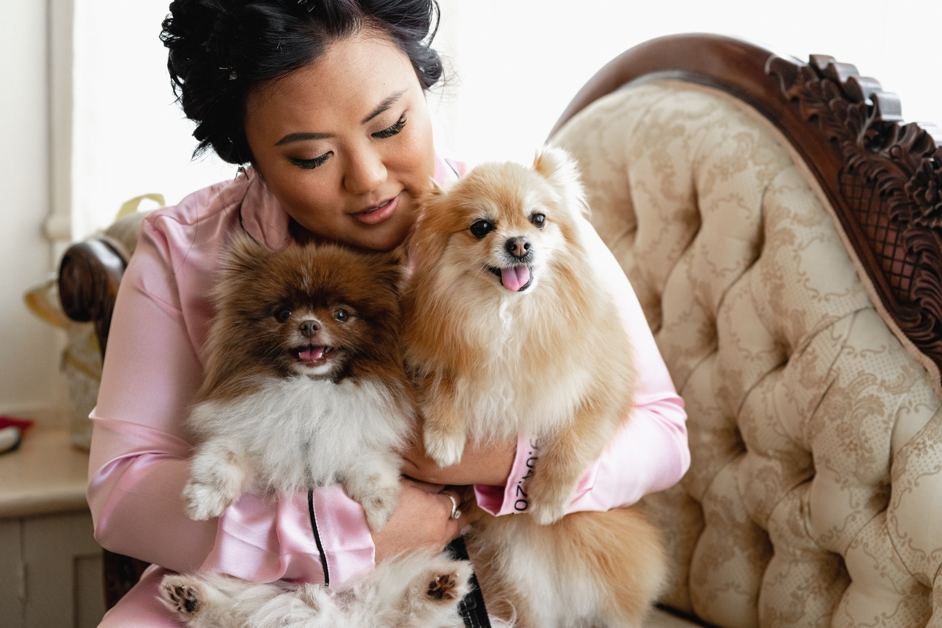 Bride snuggling two dogs on chaise lounge