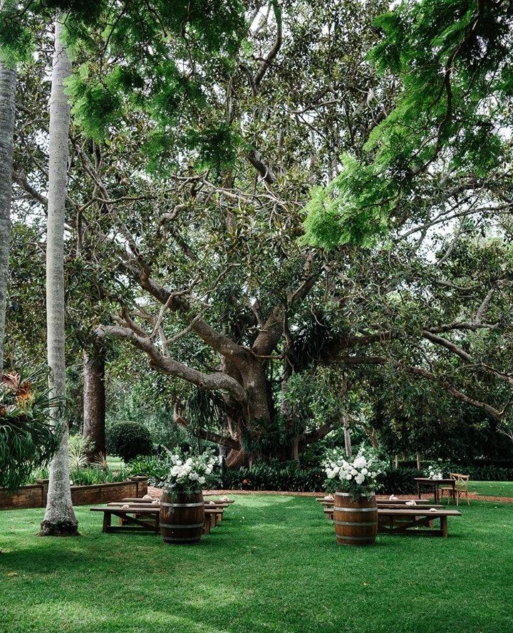 Wedding ceremony held under fig tree