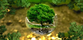 Eco Friendly and our love for the Planet