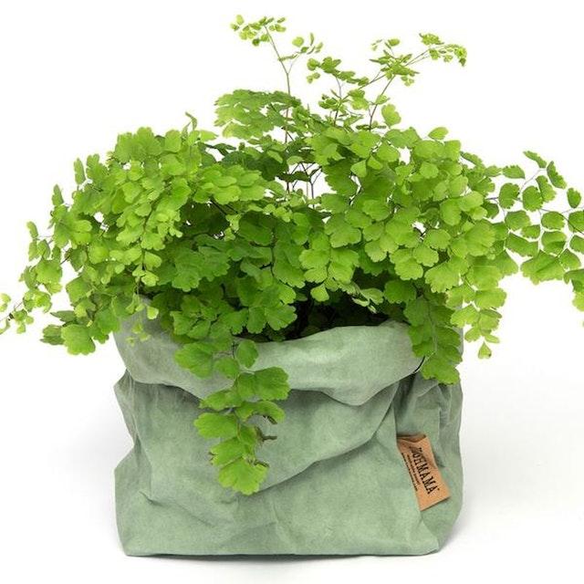 UASHMAMA Paper Bag Colored Medium  Salvia