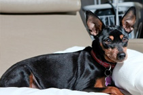 Pet Therapy for Cancer Patients