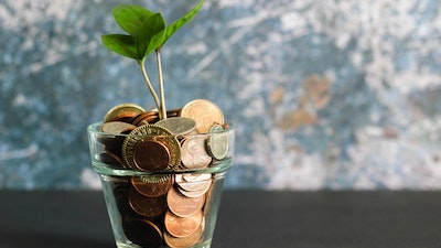 Plant in pot of coins