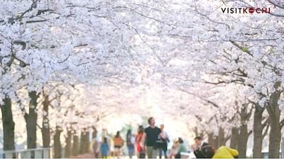 Tags: human, person, plant, blossom, flower