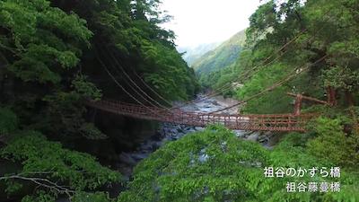 Tags: building, bridge, suspension bridge, rope bridge, outdoors, nature, rainforest, plant, tree, land