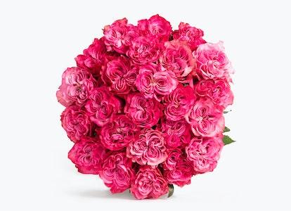 Magenta Roses: Magenta Garden Roses - Image#2793742